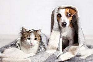 Cat and dog under blanket